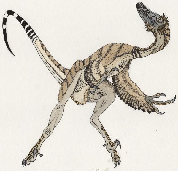 Fossils | NorArte studio