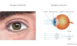 Ilustraciones de ojos. 1.- Ilustración sobre anatomía externa del ojo y 2. Ilustración sobre anatomía interna del ojo