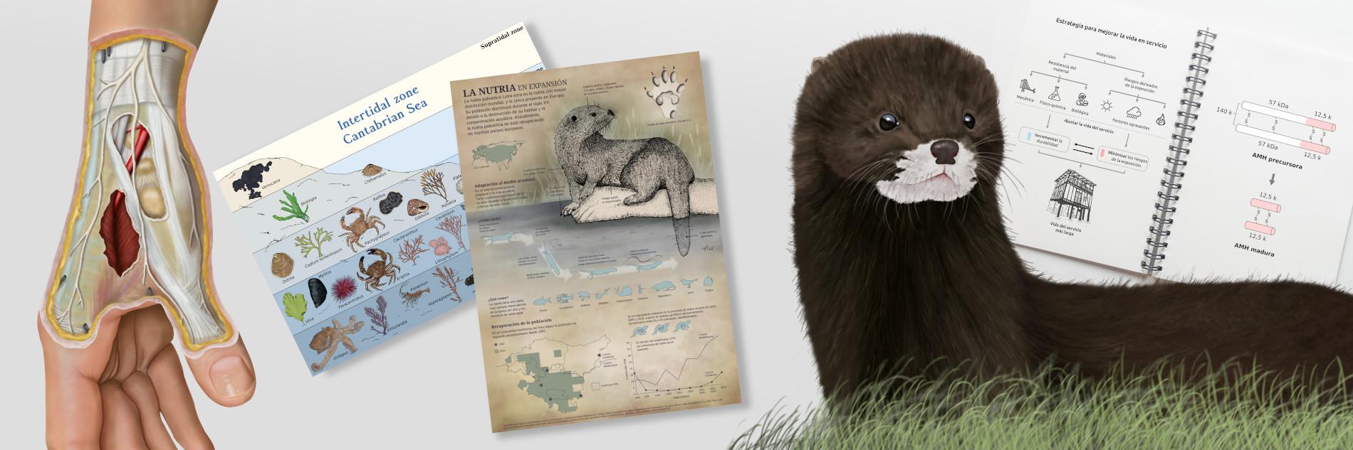 Montaje con varios dibujos científicos de NorArte Visual Science