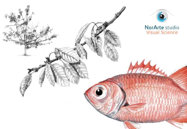Imagen de Cursos de ilustración naturalista